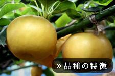 あきづき梨(あきづきなし)