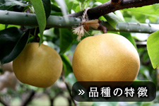 豊水梨(ほうすいなし)