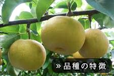 幸水梨(こうすいなし)
