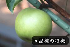 なつひめ梨(なつひめなし)