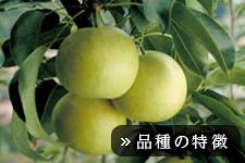 二十世紀梨(にじゅっせいきなし)
