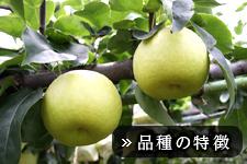 真寿梨(しんじゅなし)
