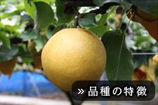 新興梨(しんこうなし)