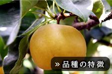 新水梨(しんすいなし)