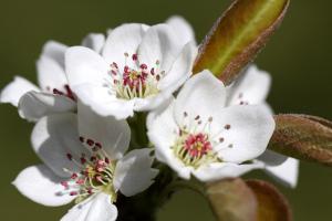 純白の花です