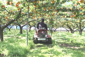 梨園の草刈作業1