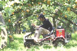 梨園の草刈作業2