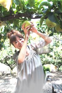 梨狩り 3