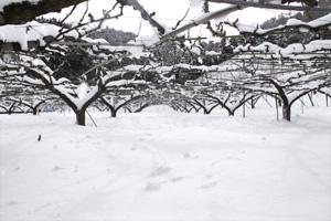 10年ぶりの大雪 2
