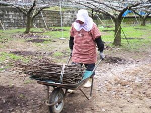 2月下旬の梨狩り園 2