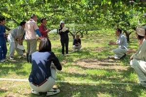 梨の小袋掛け体験作業 1