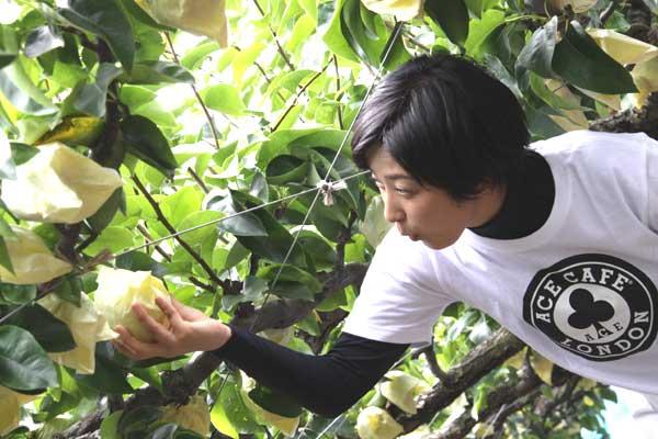多門さんが梨を選んでいます