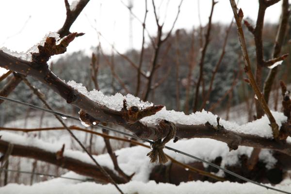 この冬 初の積雪