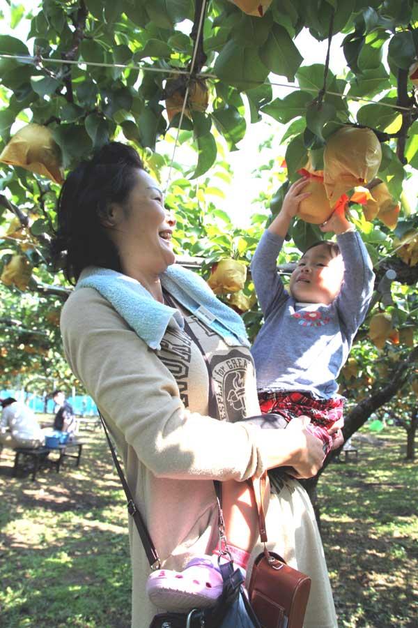 鳥取砂丘に近い梨狩り園【味果園】では、11月上旬まで梨狩りをお楽しみいただけます。