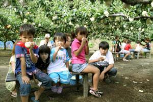 とれたての梨を美味しそうに食べている子供達です。