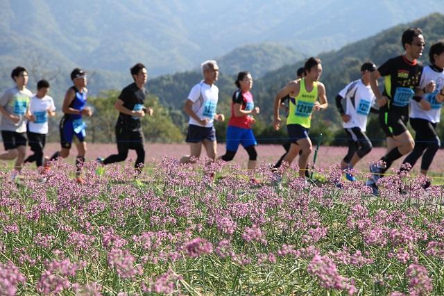 らっきょう花マラソン