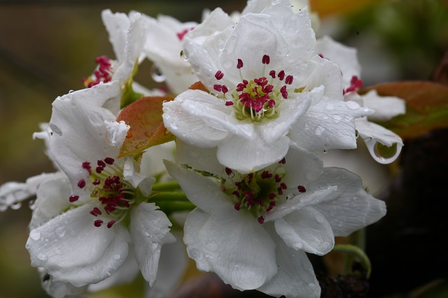 夏ひめ雨天の花