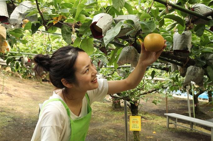 秋栄収穫1