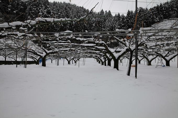 2020-02-18 積雪